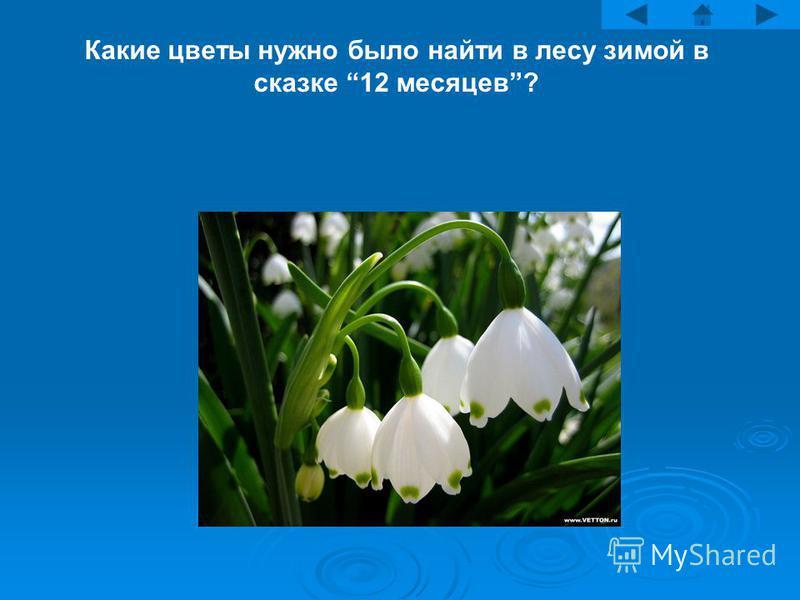 Какие цветы нужно было найти в лесу зимой в сказке 12 месяцев?