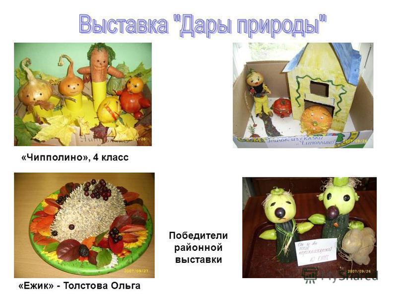 «Чипполино», 4 класс Победители районной выставки «Ежик» - Толстова Ольга