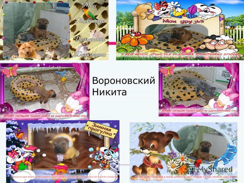 Вороновский Никита