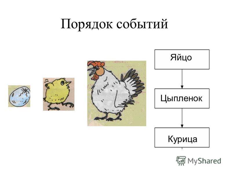 Порядок событий Яйцо Цыпленок Курица
