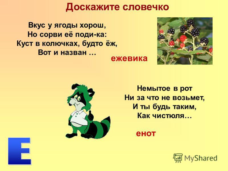Доскажите словечко Немытое в рот Ни за что не возьмет, И ты будь таким, Как чистюля… Вкус у ягоды хорош, Но сорви её поди-ка: Куст в колючках, будто ёж, Вот и назван … ежевика енот