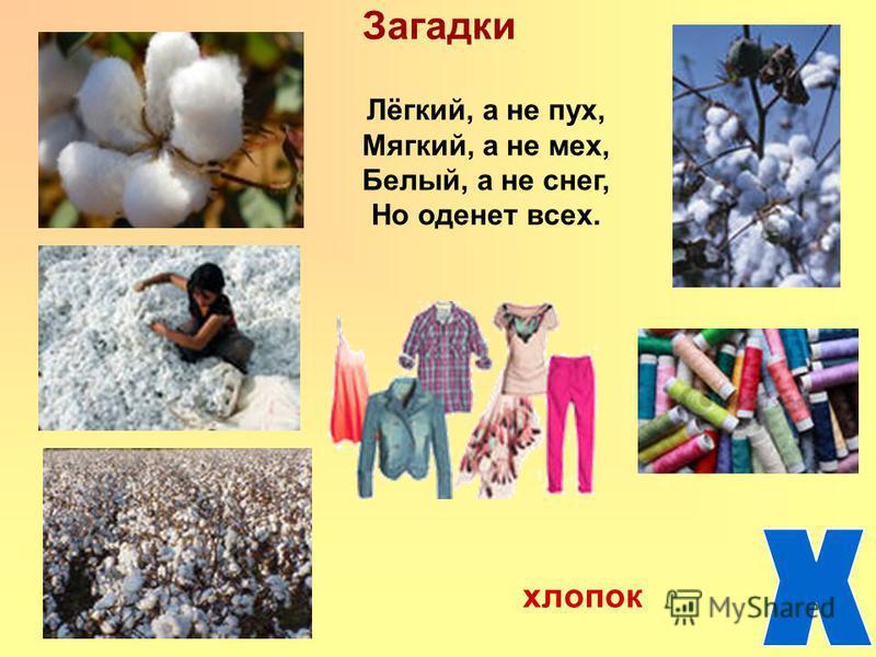 Загадки Лёгкий, а не пух, Мягкий, а не мех, Белый, а не снег, Но оденет всех. хлопок