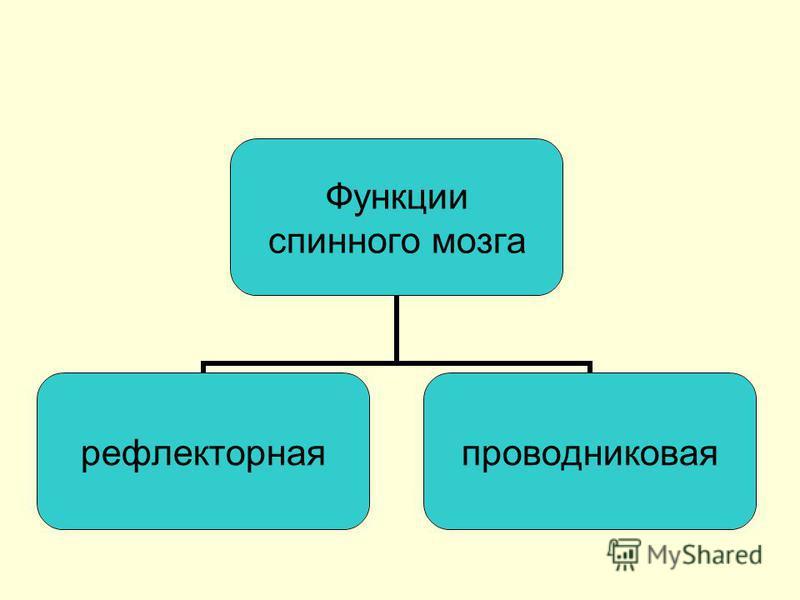 Функции спинного мозга рефлекторная проводниковая