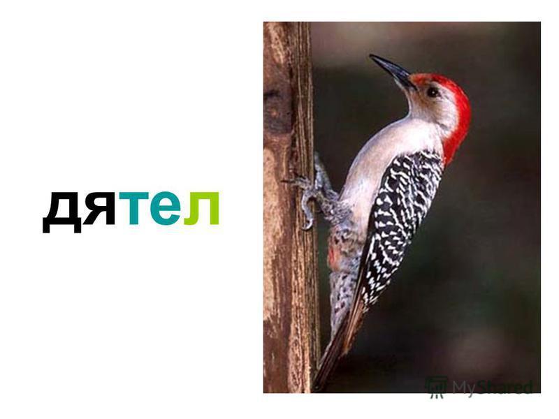 озвученные птицы