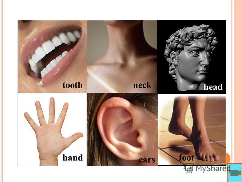 toothneck head hand ears foot