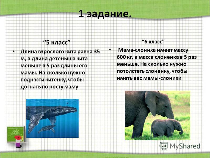1 задание. 5 класс Длина взрослого кита равна 35 м, а длина детеныша кита меньше в 5 раз длины его мамы. На сколько нужно подрасти китенку, чтобы догнать по росту маму 6 класс Мама-слониха имеет массу 600 кг, а масса слоненка в 5 раз меньше. На сколь
