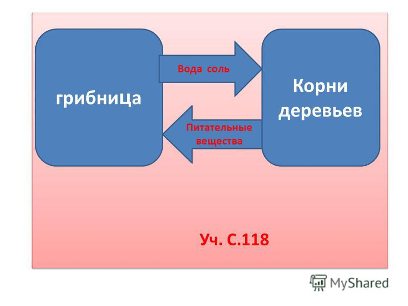 Уч. С.118 грибница Корни деревьев Вода соль Питательные вещества