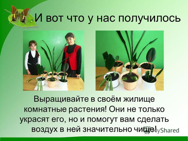 И вот что у нас получилось Выращивайте в своём жилище комнатные растения! Они не только украсят его, но и помогут вам сделать воздух в ней значительно чище!