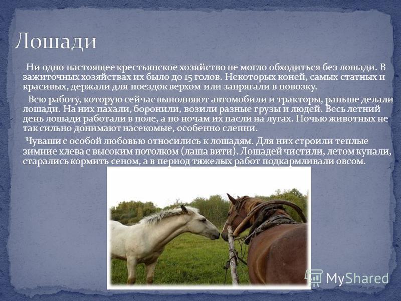 Ни одно настоящее крестьянское хозяйство не могло обходиться без лошади. В зажиточных хозяйствах их было до 15 голов. Некоторых коней, самых статных и красивых, держали для поездок верхом или запрягали в повозку. Всю работу, которую сейчас выполняют