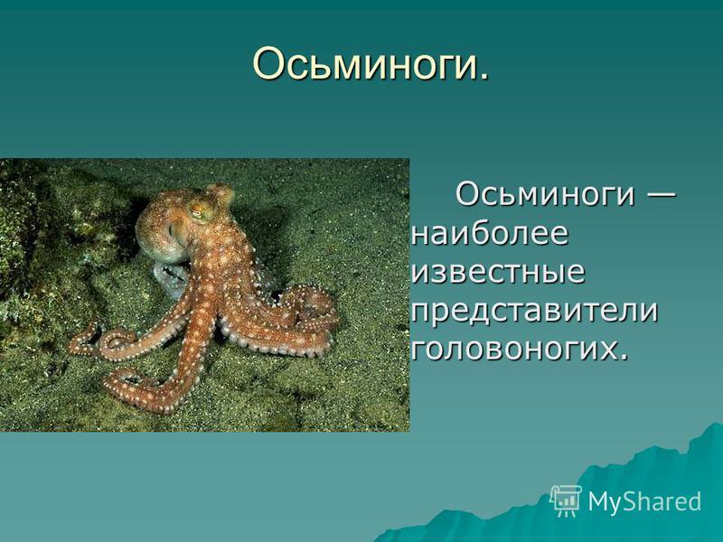 Осьминоги. О Осьминоги наиболее известные представители головоногих.
