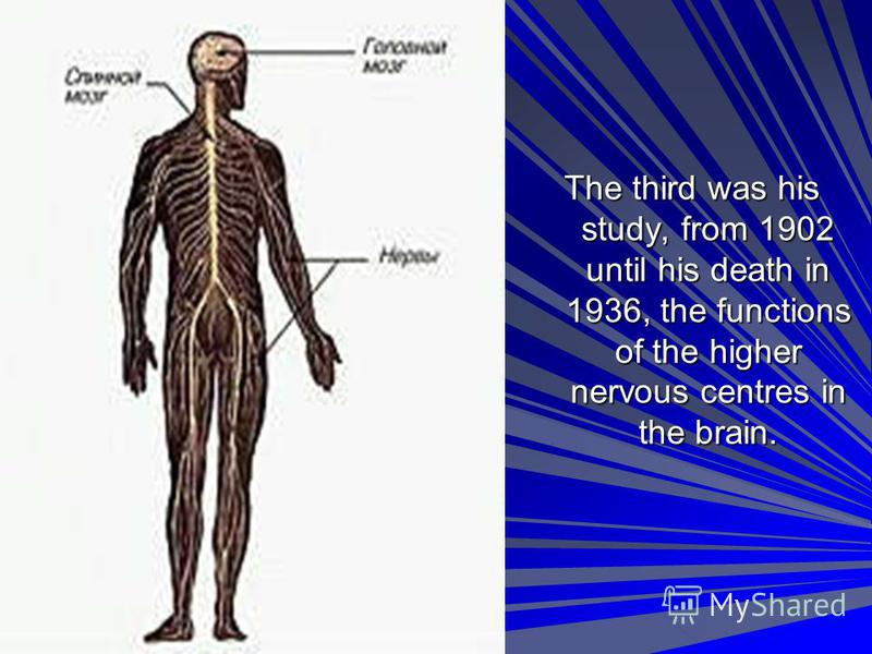 The third was his study, from 1902 until his death in 1936, the functions of the higher nervous centres in the brain.