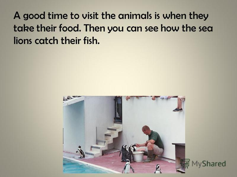 A good time to visit the animals is when they take their food. Then you can see how the sea lions catch their fish.