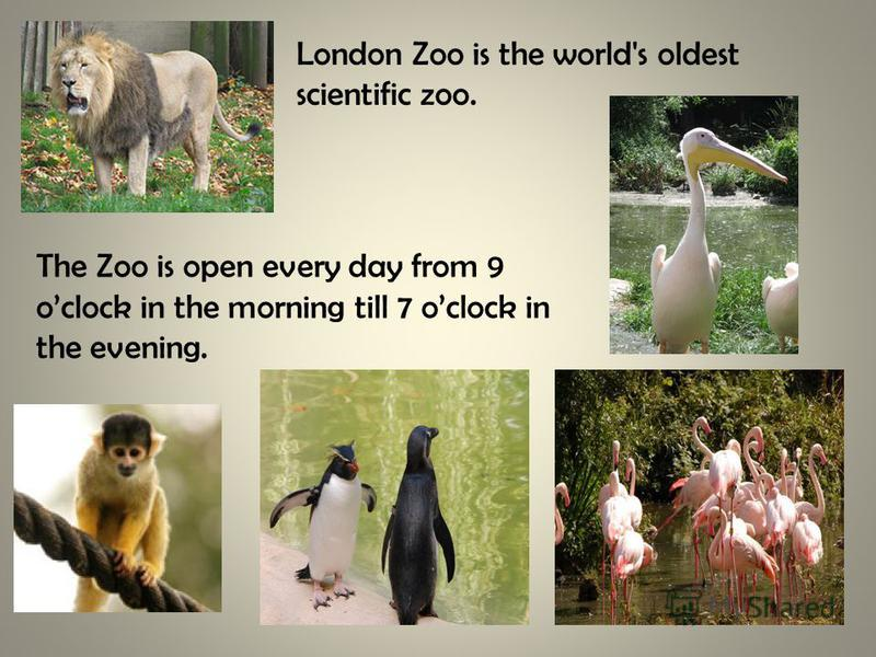 The Zoo is open every day from 9 oclock in the morning till 7 oclock in the evening. London Zoo is the world's oldest scientific zoo.