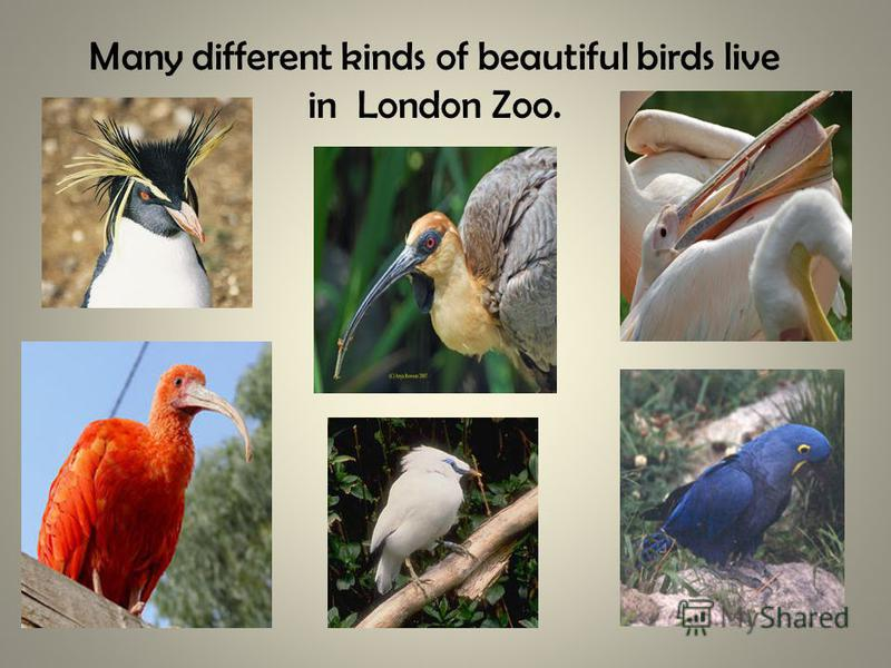 Many different kinds of beautiful birds live in London Zoo.