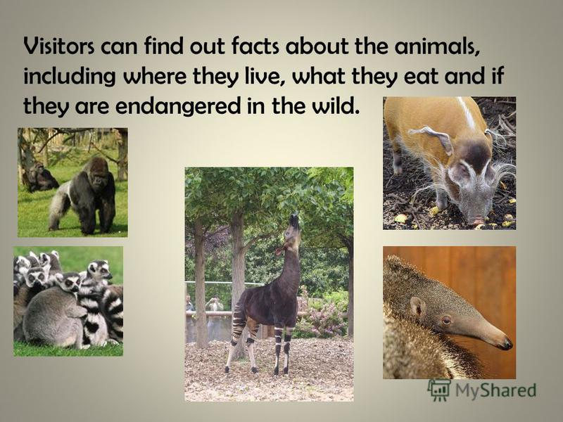 Visitors can find out facts about the animals, including where they live, what they eat and if they are endangered in the wild.