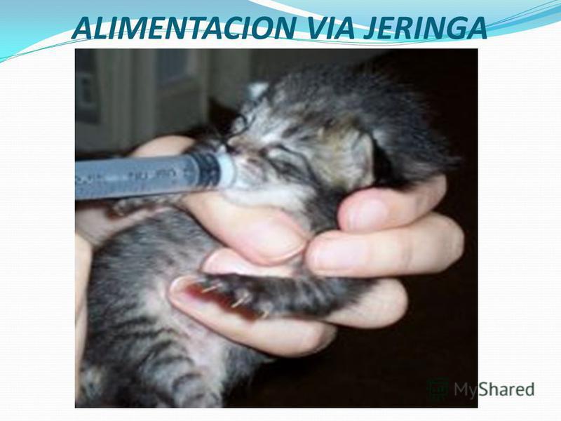 JERINGUILLA jeringa automática la pistolita, jeringa que sirve en la práctica medica y veterinaria para el uso de vacunas y sedantes.