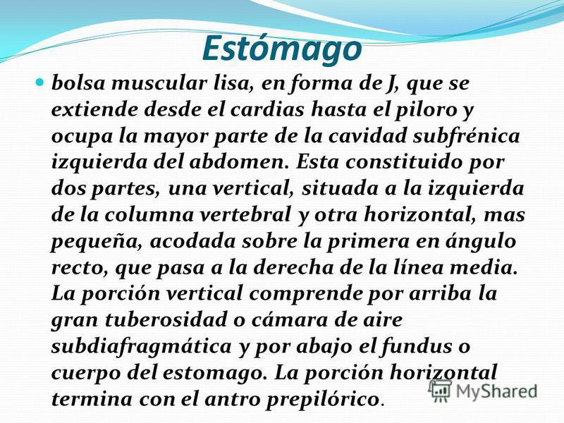 Sistema digestivo A partir del estómago, los diferentes segmentos de las vías digestivas, junto con sus glándulas mayores (hígado y páncreas), así como el bazo y el sistema urogenital, están situados en la cavidad abdominal.