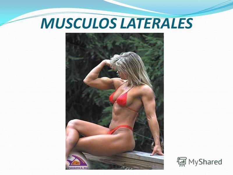Músculos laterales. a) Músculo oblicuo externo del abdomen (m. obliquus externus abdominis) b) Músculo oblicuo interno del abdomen (m. obliquus internus abdominis) c) Músculo transverso del abdomen (m. trasnversus abdominis) - Músculos anteriores. a)