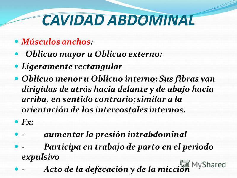 CAVIDAD ABDOMINAL Después del tabique adiposo encontramos la presencia de venas subcutáneas. que se anastomosan entra la subcutánea abdominal y la circunfleja iliaca superficial con las venas de las axilas. y estas anastomosis son bien marcadas cuand
