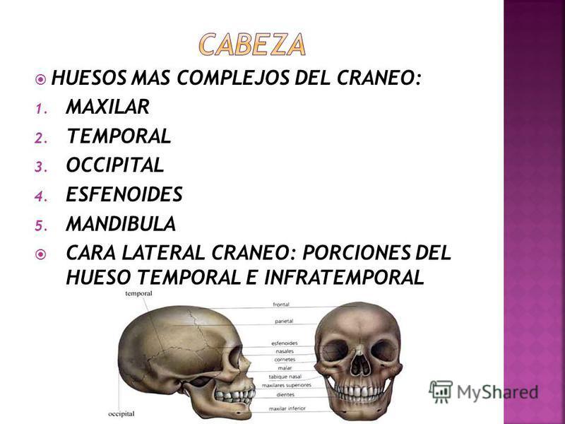 PARTE POSTERIOR DE CRANEO: 1. PARIETALES 2. OCCIPITAL 3. PORCIONES MASTOIDEAS DE LOS TEMPORALES CARA ANTERIOR: 1. FRENTE 2. ORBITAS 3. POMULOS 4. PARTE OSEA DEL ESQUELETO DE LA NARIZ 5. MANDIBULA Y MAXILA