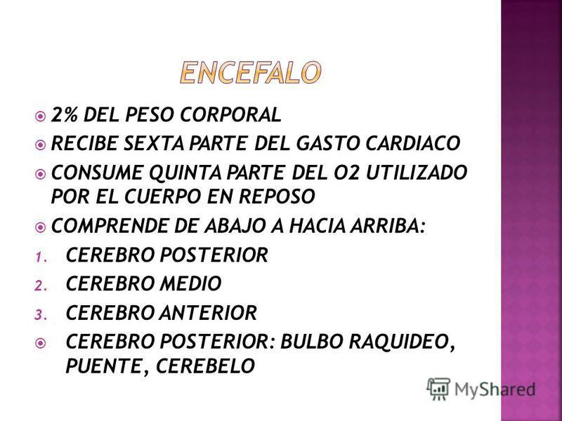 CARA INFERIOR DEL CRANEO: 1. HUESO OCCIPITAL 2. HUESO TEMPORAL CAVIDAD CRANEAL: 1. ALOJA AL ENCEFALO 2. MENINGES 3. ALGUNOS NERVIOS CRANEALES 4. VASOS SANGUINEOS SU TECHO ES LA BOVEDA CRANEAL SU SUELO ESTA FORMADO POR LA CARA SUPERIOR DE LA BASE DEL