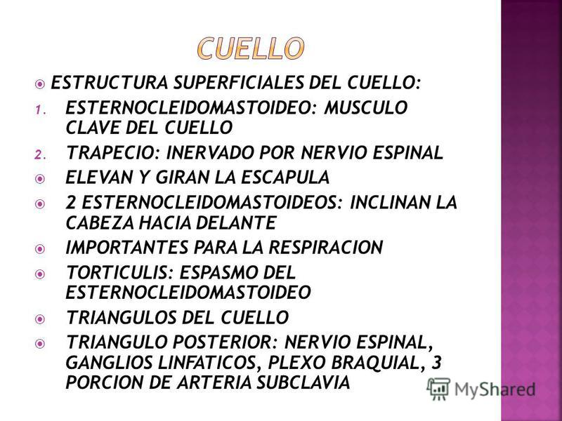 DRENAJE VENOSO: 1. VENAS CEREBRALES SUPERIORES 2. VENA CEREBRAL MEDIA SUPERFICIAL 3. VENAS CEREBRALES INFERIORES 4. VENA BASAL 5. GRAN VENA CEREBRAL 6. SENOS VENOSOS DE LA DURAMADRE 7. SENO LONGITUDINAL SAGITAL SUPERIOR 8. SENO LONGITUDINAL INFERIOR