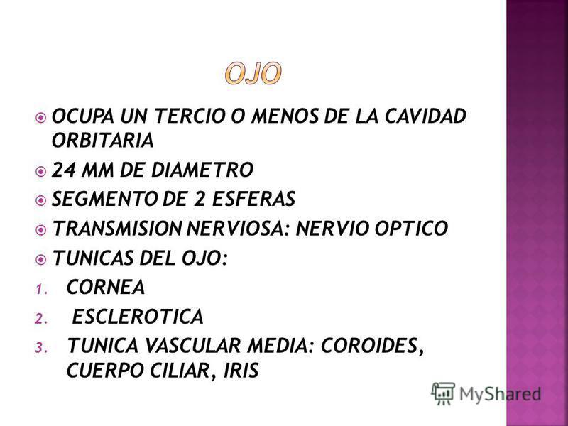 INERVACION: 1. NERVIO LARINGEO INTERNO 2. NERVIO LARINGEO EXTERNO 3. NERVIO LARINGEO RECURRENTE RIEGO SANGUINEO: 1. ARTERIAS LARINGEAS SUPERIORES 2. RAMAS ARTERIAS TIROIDEAS SUPERIOR E INFERIOR VENAS ACOMPAÑAN A LAS ARTERIAS LINFATICOS DESEMBOCAN EN