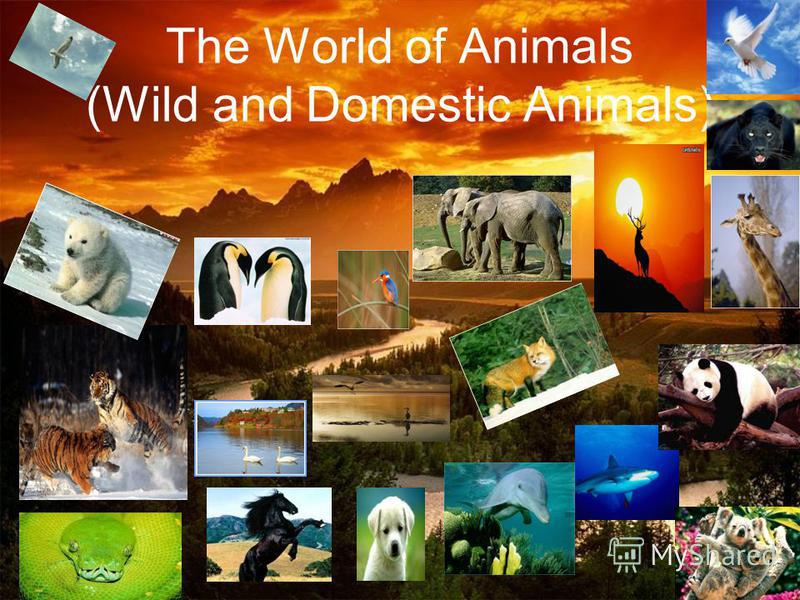 The World of Animals (Wild and Domestic Animals)