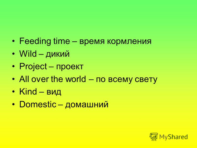 Feeding time – время кормления Wild – дикий Project – проект All over the world – по всему свету Kind – вид Domestic – домашний