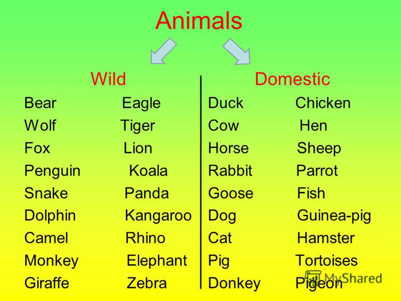 Animals Wild Bear Eagle Wolf Tiger Fox Lion Penguin Koala Snake Panda Dolphin Kangaroo Camel Rhino Monkey Elephant Giraffe Zebra Domestic Duck Chicken Cow Hen Horse Sheep Rabbit Parrot Goose Fish Dog Guinea-pig Cat Hamster Pig Tortoises Donkey Pigeon