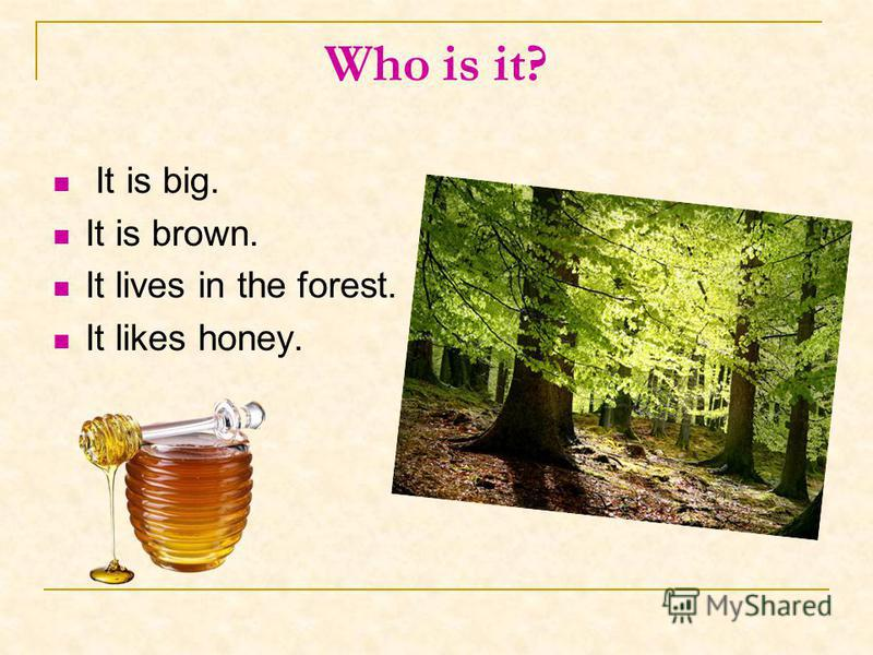 Who is it? It is big. It is brown. It lives in the forest. It likes honey.