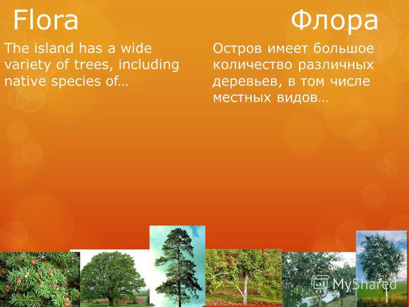 Flora Флора The island has a wide variety of trees, including native species of… Остров имеет большое количество различных деревьев, в том числе местных видов…