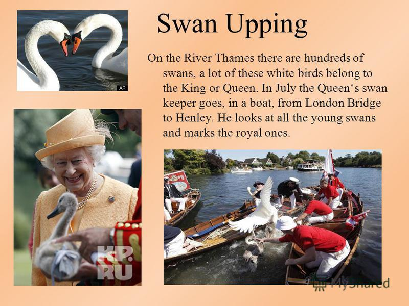 Swan Upping On the River Thames there are hundreds of swans, a lot of these white birds belong to the King or Queen. In July the Queens swan keeper goes, in a boat, from London Bridge to Henley. He looks at all the young swans and marks the royal one