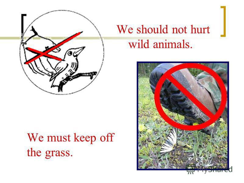 We must keep off the grass. We should not hurt wild animals.