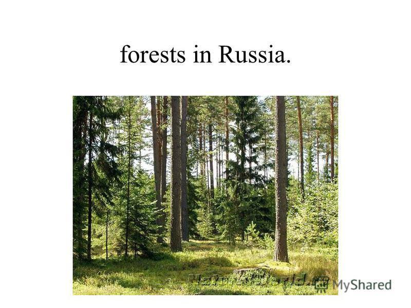 forests in Russia.
