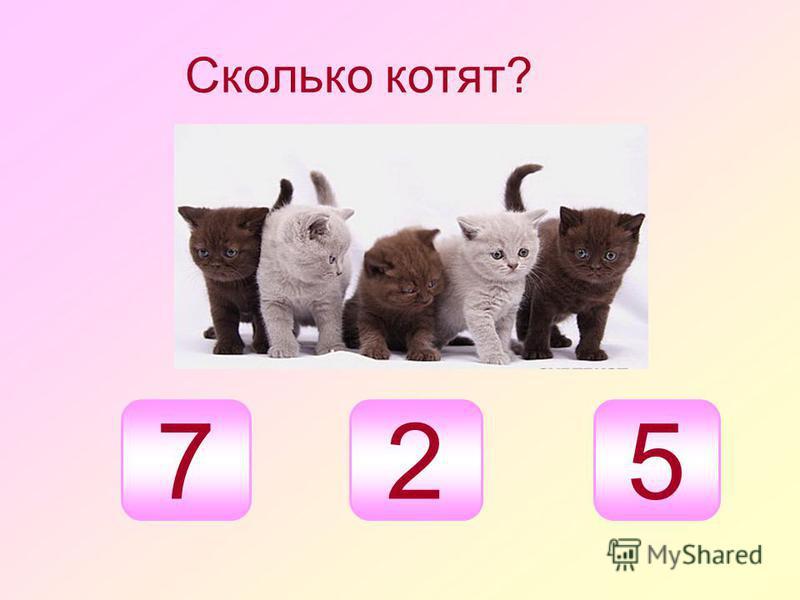 Сколько котят? 527