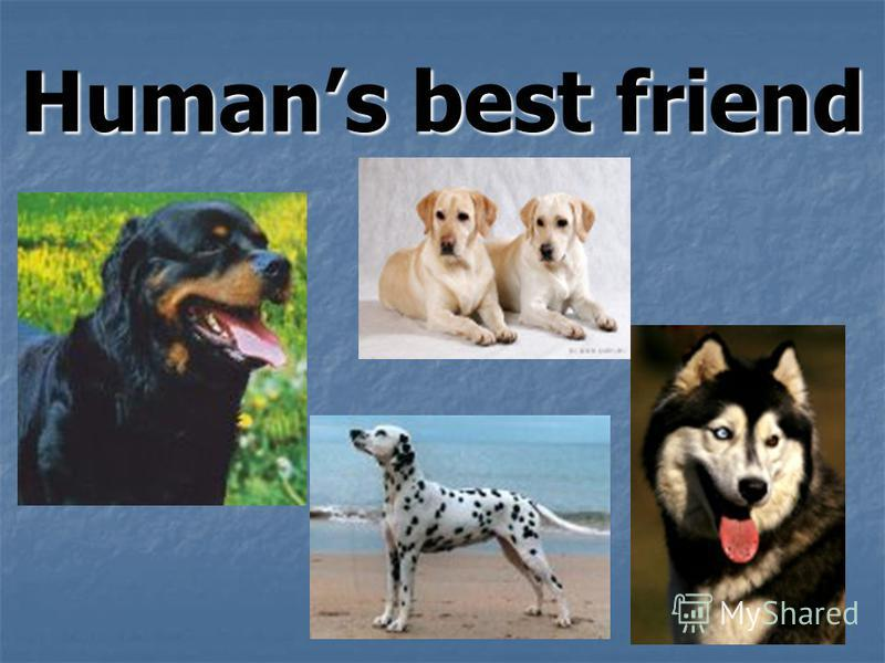 Humans best friend
