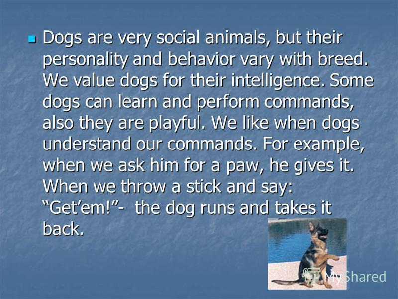 Dogs are very social animals, but their personality and behavior vary with breed. We value dogs for their intelligence. Some dogs can learn and perform commands, also they are playful. We like when dogs understand our commands. For example, when we a