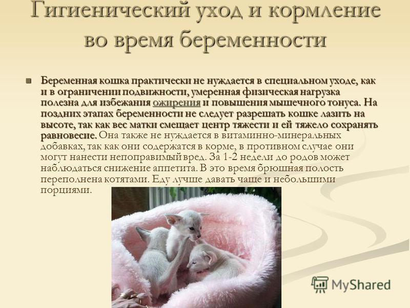 Гигиенический уход и кормление во время беременности Беременная кошка практически не нуждается в специальном уходе, как и в ограничении подвижности, умеренная физическая нагрузка полезна для избежания ожирения и повышения мышечного тонуса. На поздних