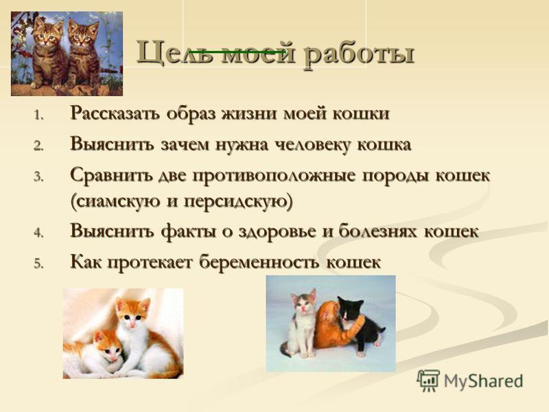 Цель моей работы 1. Рассказать образ жизни моей кошки 2. Выяснить зачем нужна человеку кошка 3. Сравнить две противоположные породы кошек (сиамскую и персидскую) 4. Выяснить факты о здоровье и болезнях кошек 5. Как протекает беременность кошек