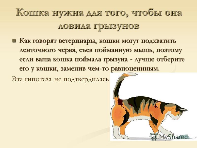 Кошка нужна для того, чтобы она ловила грызунов Как говорят ветеринары, кошки могут подхватить ленточного червя, съев пойманную мышь, поэтому если ваша кошка поймала грызуна - лучше отберите его у кошки, заменив чем-то равноценным. Как говорят ветери