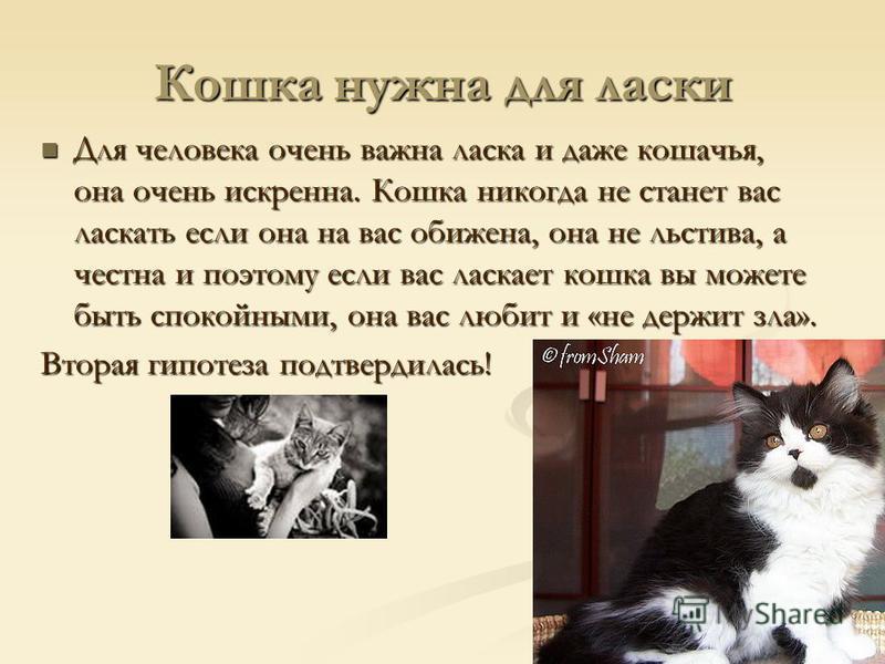 Кошка нужна для ласки Для человека очень важна ласка и даже кошачья, она очень искренна. Кошка никогда не станет вас ласкать если она на вас обижена, она не льстива, а честна и поэтому если вас ласкает кошка вы можете быть спокойными, она вас любит и