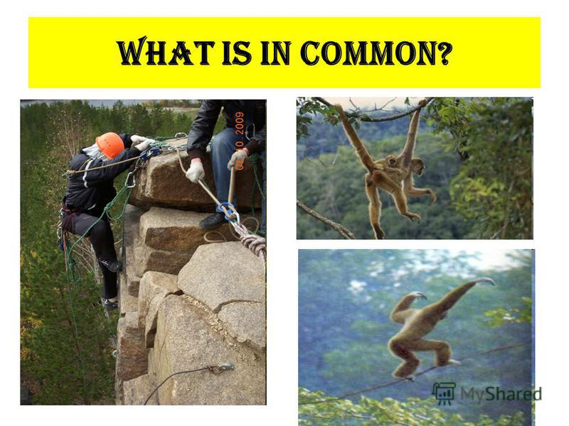 What is in common?