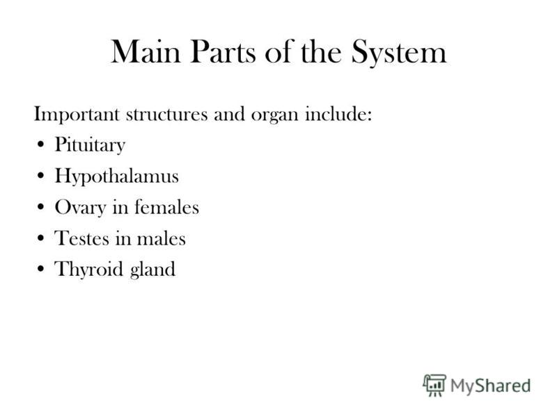 Main Parts of the System Important structures and organ include: Pituitary Hypothalamus Ovary in females Testes in males Thyroid gland