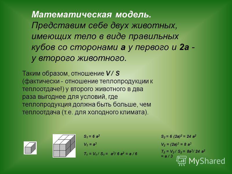S 1 = 6 a 2 S 2 = 6 (2a) 2 = 24 a 2 V 1 = a 3 V 2 = (2a) 3 = 8 a 3 T 1 = V 1 / S 1 = a 3 / 6 a 2 = a / 6 T 2 = V 2 / S 2 = 8a 3 / 24 a 2 = a / 3 Математическая модель. Представим себе двух животных, имеющих тело в виде правильных кубов со сторонами а
