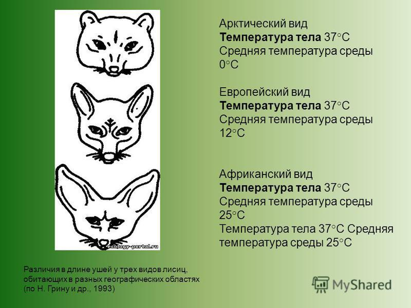Арктический вид Температура тела 37°С Средняя температура среды 0°С Европейский вид Температура тела 37°С Средняя температура среды 12°С Африканский вид Температура тела 37°С Средняя температура среды 25°С Температура тела 37°С Средняя температура ср