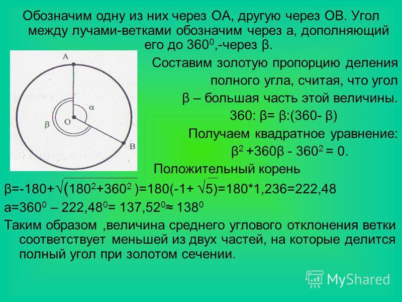 Обозначим одну из них через ОА, другую через ОВ. Угол между лучами-ветками обозначим через а, дополняющий его до 360 0,-через β. Составим золотую пропорцию деления полного угла, считая, что угол β – большая часть этой величины. 360: β= β:(360- β) Пол