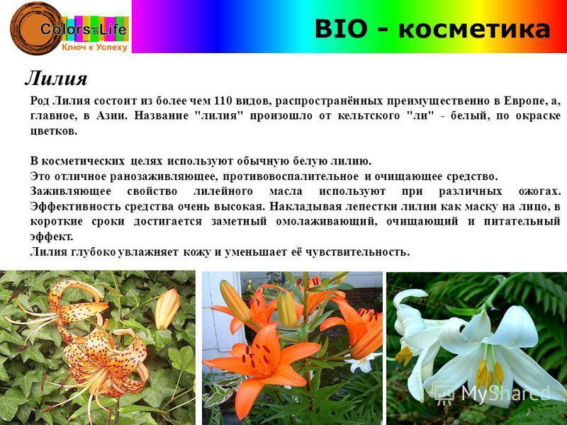 BIO - косметика Лилия Род Лилия состоит из более чем 110 видов, распространённых преимущественно в Европе, а, главное, в Азии. Название