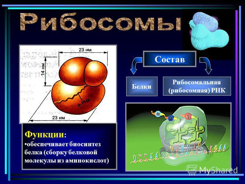 сборка белковой молекулы видео