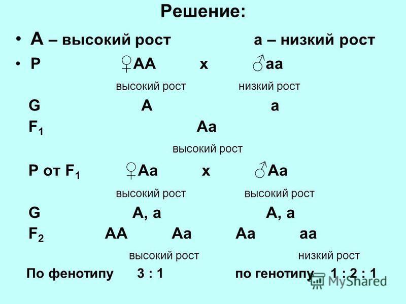 Решение: А – высокий рост а – низкий рост Р АА x а высокий рост низкий рост G А а F 1 Аа высокий рост P от F 1 Аа x Аа высокий рост высокий рост G А, а А, а F 2 АА Аа Аа а высокий рост низкий рост По фенотипу 3 : 1 по генотипу 1 : 2 : 1